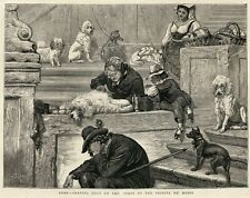 POODLE FRENCH WHITE DOG ANTIQUE ART PRINT Dog Grooming Rome 1872 Trinata deMonti