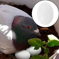 30Pcs Pigeon Egg Plastic Simualtaion Adornment Hatching Eggs