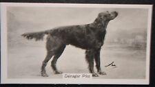 Gordon Setter    Vintage 1930's Show Champion  Original Photo Card # Unmounted