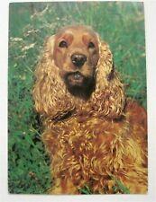 English Cocker Spaniel Dog Breed Postcard