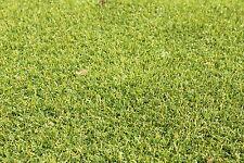 Gazon synthétique  TOP vert, 1 m de largeur, longueur à votre choix :-)