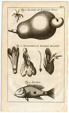 Antique Print-CASHEW-HOGWEED-ACARA FISH-Buys-1770