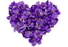 Violet Leaf Absolute Oil 5ml 100% Pure Essential Oil