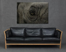 Elephant Eye Close Up Face Skin Print Canvas Art Living Room Home Big Large Grey