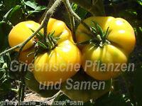 🔥 Tomate BRANDYWINE GELB tolle alte Sorte aus Amerika 10 frische Samen Balkon
