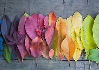 A1 | Autumn Leaves Colour Palette Poster Print 60 x 90cm 180gsm Wall Art #16129