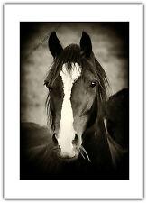 Greetings Card Birthday / Blank Notelet - Horse Pony Black Beauty Pet Animal