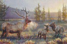 MORNING BY NANCY GLAZIER  Wildlife Elk Print 24x16