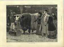1883 The Pleasure Of Success Prize Bull Christmas Cattle Show