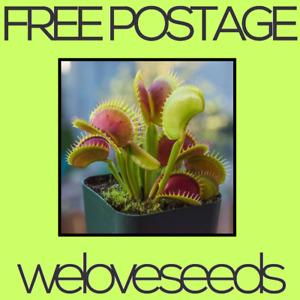 LOCAL AUSSIE STOCK - Dionaea Muscipula, Venus Fly Trap, Plant Seeds ~100x