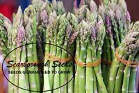 SCARBOROUGH SEDS Asparagus Mary Washington 100 Seeds Non GMO Fresh Garden Seeds