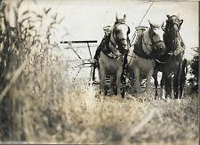 PHOTO DE PRESSE D.N.P. juillet 1943 +AGRICULTURE + MOISSON + 3 CHEVAUX faucheuse
