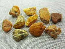 Lot of 10 Natural Rare Drops Genuine Baltic Amber Stones Nuggets 28.50 grams