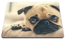 Pug Dog Close up - Computer Mousemat