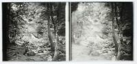 Legno Creek Cascade Foto Stereo Francia PL58L14n16 Placca Da Lente c1950