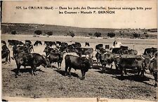 CPA  Le Cailar(Gard) - Dans les prés des Demoiselles,taureaux sauvages (299770)