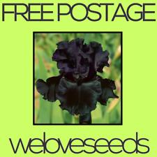 LOCAL AUSSIE STOCK - Black As, Bearded Iris, Flower Seeds ~10x FREE SHIPPING