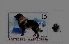 MACEDONIA Sc 145 NH issue of 1999 - DOG