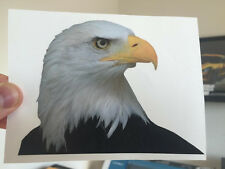 "(2 Pack!) Bald Eagle America USA Truck Car Vinyl Decal Window Sticker 5""x3.75"""