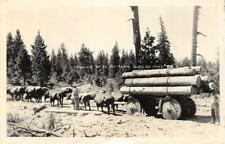 """RPPC """"Logging at Spanish Ranch"""" Logging with Ox Team ca 1930s Vintage Postcard"""