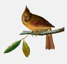 10% Off Scarlet Quince X-stitch Chart-Cardinal Grosbeak (female) - Large Print