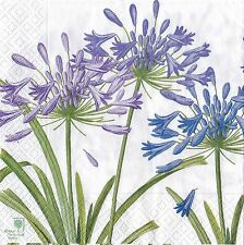 ENGLISH FLOWER TOVAGLIOLI CASPARI RHS agapanthus