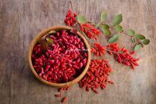 1100 Graines BIO Goji Lycium barbarum Goji-Berry Organic Chinese Wolfberry seeds