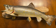 Vintage 16� Brook Trout Skin Mount Taxidermy