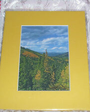 PHOTO ART JUNIPER PASS ARAPAHO NAT FOREST CO 5X7 MATTED 8X10 SIGNED #8/250
