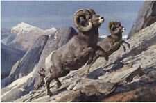 BOB KUHN - BIGHORN SHEEP - 12 x 16 Print HUNTING BIG GAME