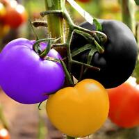 100Pcs Rainbow Tomato Seeds Bonsai Fresh Organic Vegetables Seed Home Garden