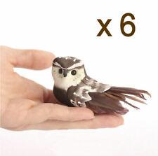 6 x Owls 3.5