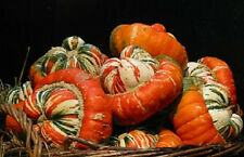 25 Gourd Turks Turban Gourd Seeds Garden Seeds