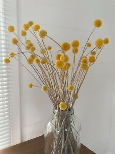 Preserved Dried Flower Bouquets - Billy Buttons Natural Australian Native
