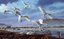 "David Maass ""Weaver Bottoms"" Tundra Swans Signed and Numbered  Print  25 x 16.5"