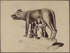 Louve capitoline Lupa Rome Roma Italie Italia Photo Vintage albumine c 1880