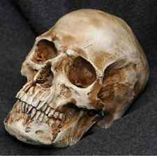Human Skull Replica Resin Model Medical Realistic lifesize 1:1 imitation decor