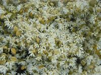 seeds New Zealand Manuka seeds 2500 Genuine NZ Leptospermum scoparium