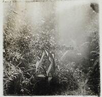 Ouesso Congo Pianta Africa Foto NE13 Placca Da Lente Stereo Vintage Ca 1910