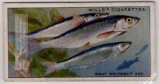 Whitebait Immature Fry Of Fish Herring Food 80+ Y/O Ad Card