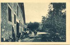 GRIGNAN abbaye de N-D d'aiguebelle la rentrée du bétail