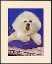 BICHON FRISE CHARMING LITTLE DOG PRINT MOUNTED READY TO FRAME