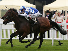 Horse Racing Daily Double + Daily Treble + High Odds Accumulator Betting Systems