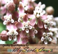 BIG PACK x (1,000) COMMON MILKWEED Seeds - Asclepias syriaca - Virginia Silkweed