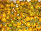 20 graines /seeds de tomate cerise jaune bio