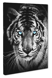 Tiger Canvas Print Wall Art Picture Blue Black CANVAS PICTURE PRINT LARGE-SMALL