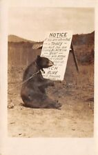 TRAINED BEAR POSES WITH ADV SIGN FOR ANIMAL RANCH, REAL PHOTO PC c 1910-20