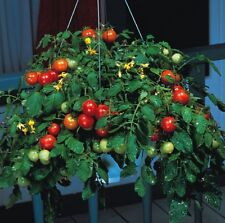 Vegetable Seeds - Tomato - Tumbler - 12 Seeds