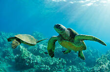 Framed Print - Giant Sea Turtles Swimming in the Ocean(Picture Poster Animal Art