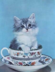 Vintage 1950s print Kitten in Tea Cup